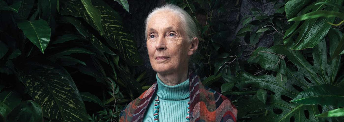 JaneGoodall-primates-entrevista.