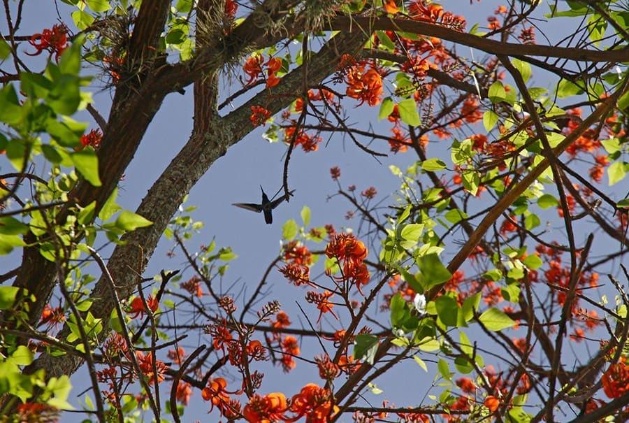 cambioclimatico-biodiversidad-cambulos-