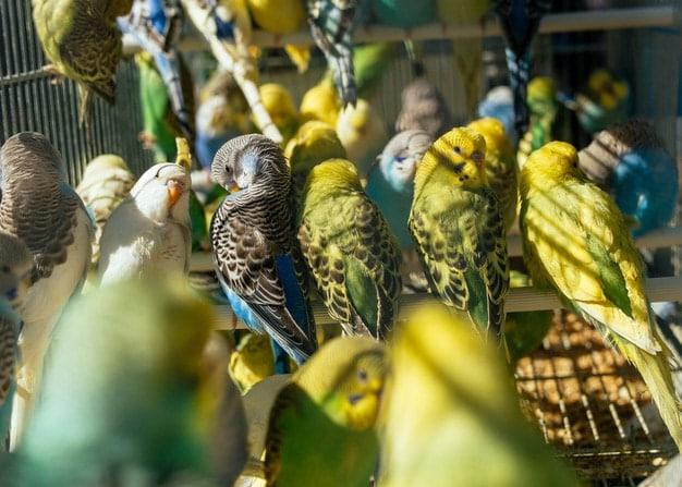 mercado-aves-monton-periquitos_181624-25730 (1)