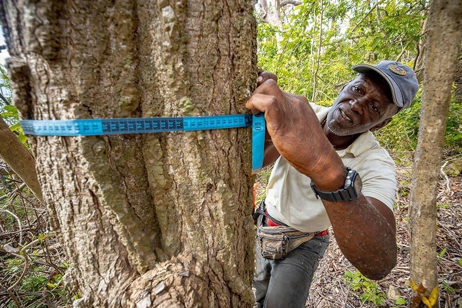 Providencia-huracan-bosqueseco