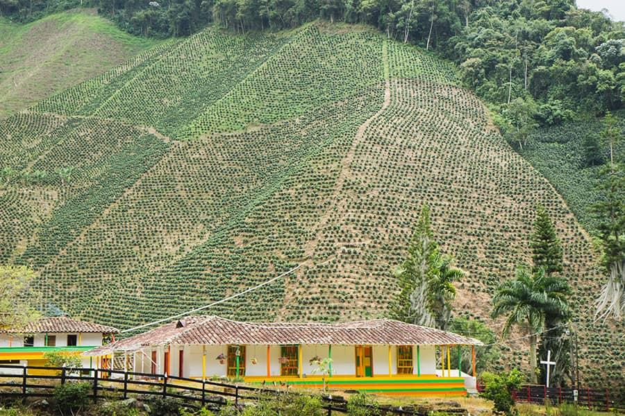 Suroeste-Antioquia-café