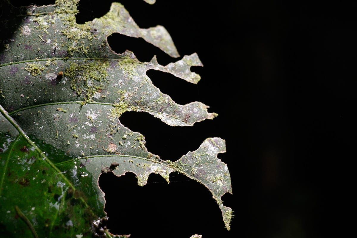 cumbreONU-biodiversidad-flora
