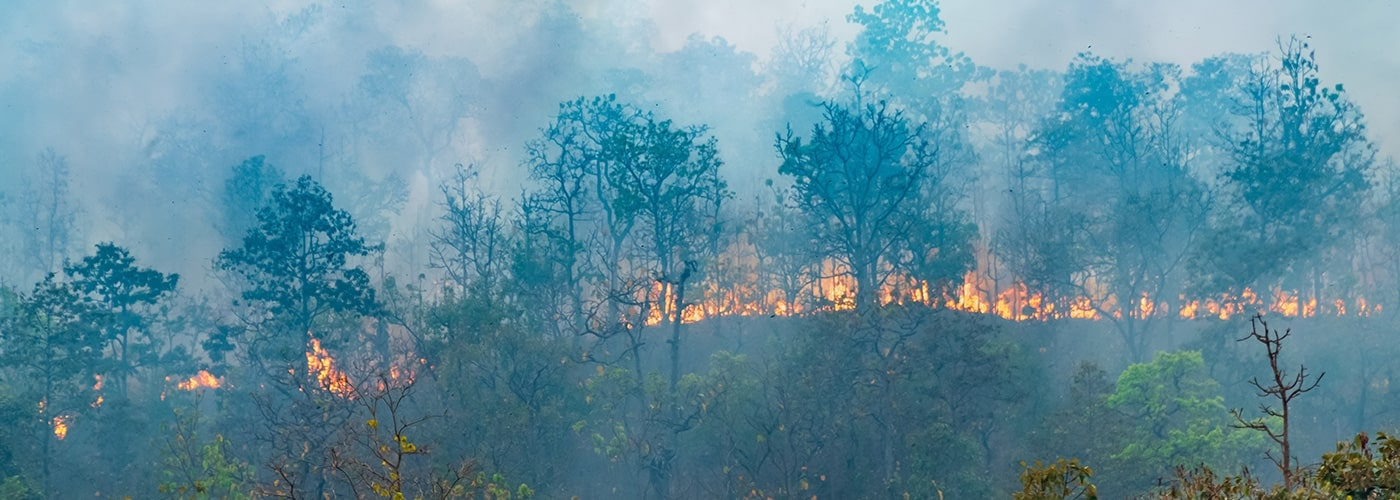 rain-forest-fire-disaster-is-burning-caused-by-humans