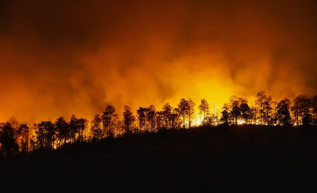 rain-forest-fire-disaster-is-burning-caused-by