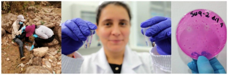 Instituto Humboldt estudio microorganismos
