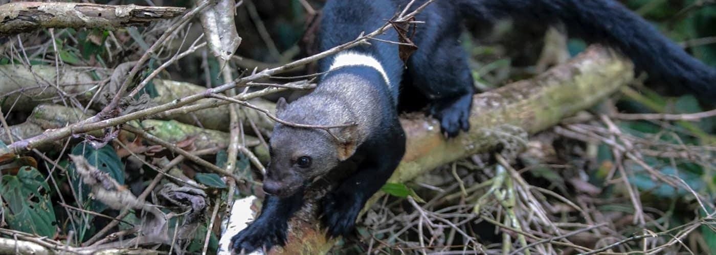 liberación de fauna en el territorio
