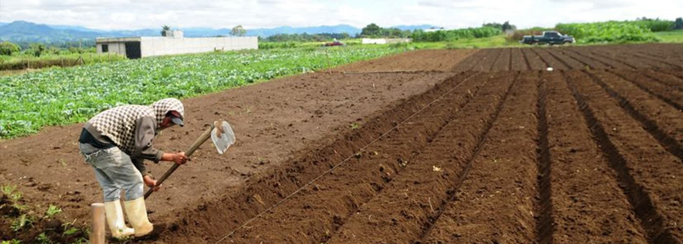 Cambio climático y consecuencias en la alimentación