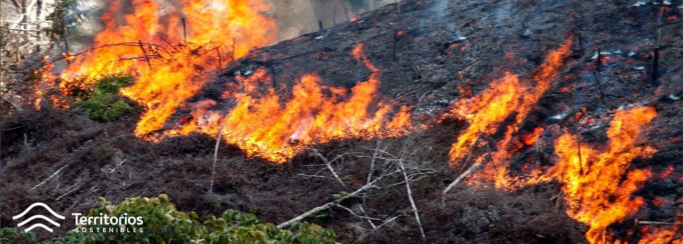 incendio-forestal-medio-ambiente