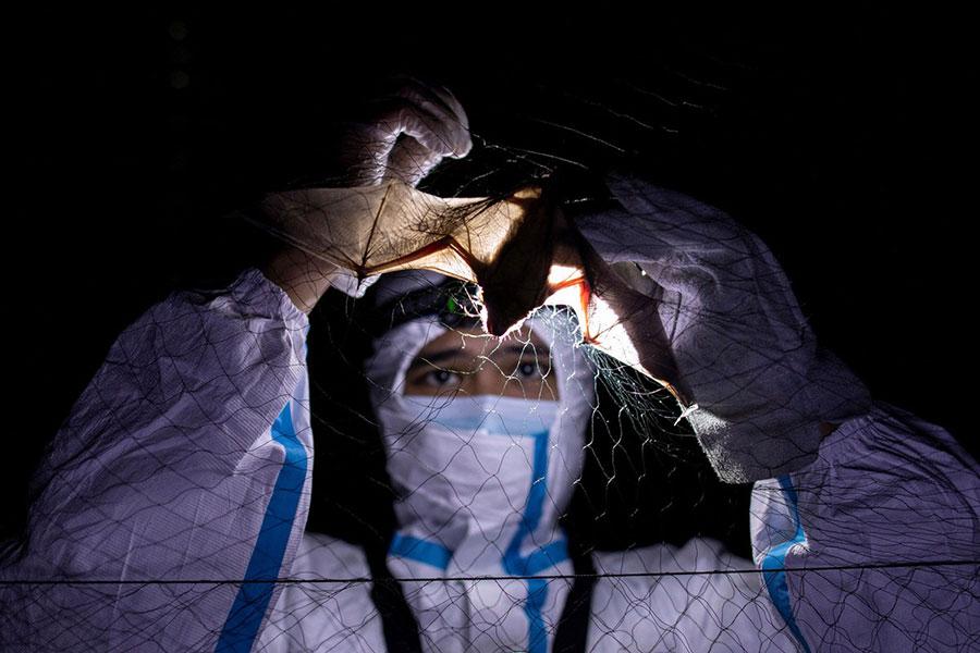 investigación COVID 19 en murciélagos
