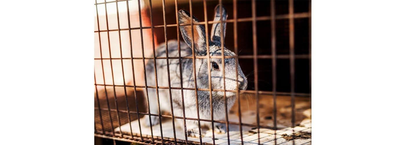 venta animales mamíferos silvestres en plazas de mercado