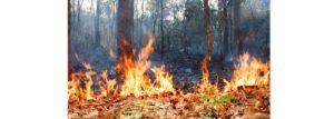 incendios en bosques tropicales