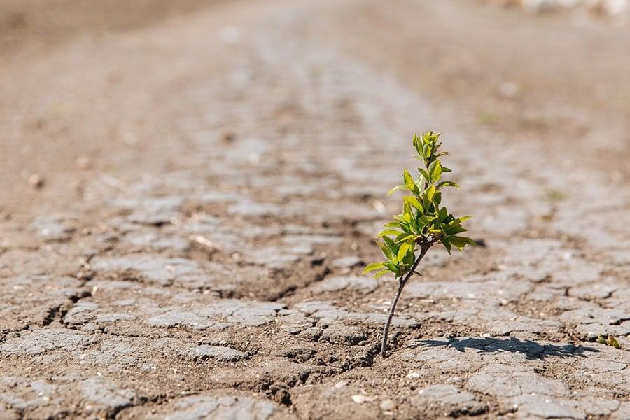 Cambio climático, sequías
