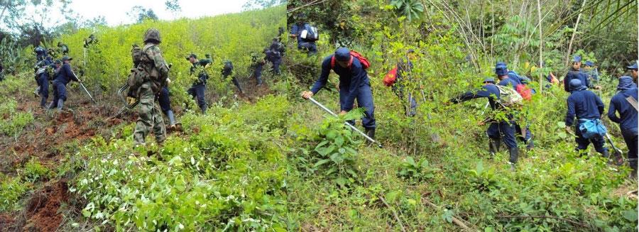 erradicación de los cultivos ilícitos