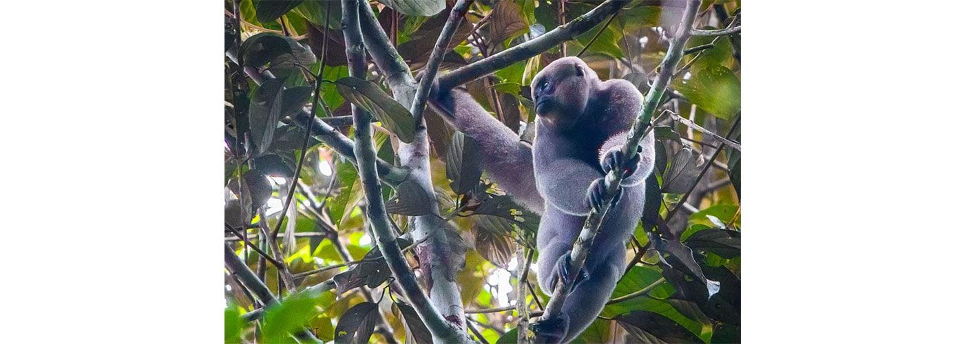 mamíferos, primates