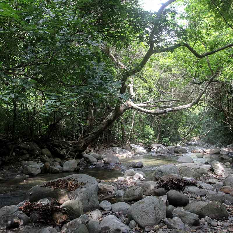 Bosque tropical, Colombia