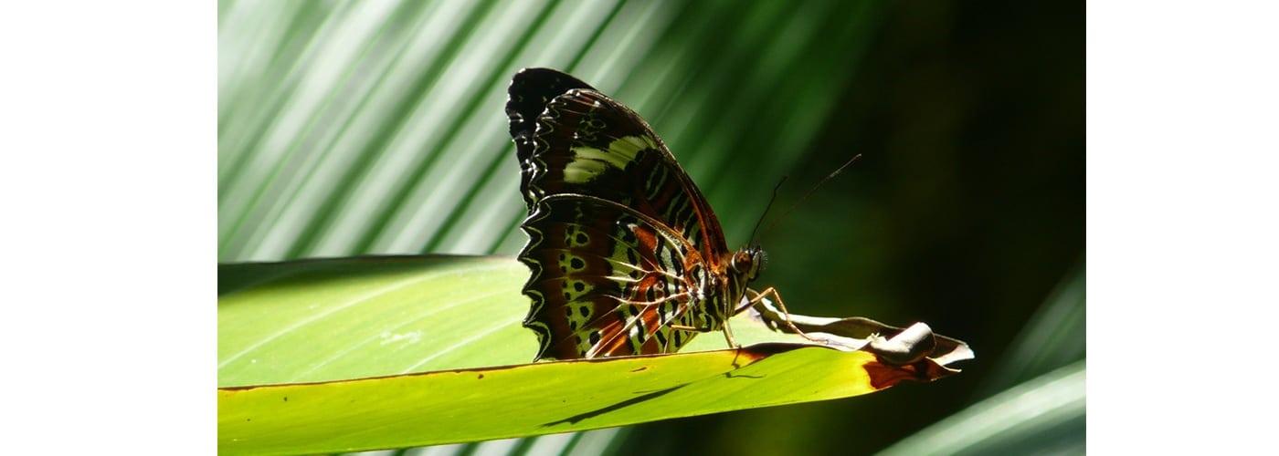 medio ambiente, biodiversidad