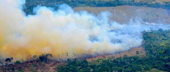 tala de bosques y las quemas para ganadería extensiva en el Amazonas