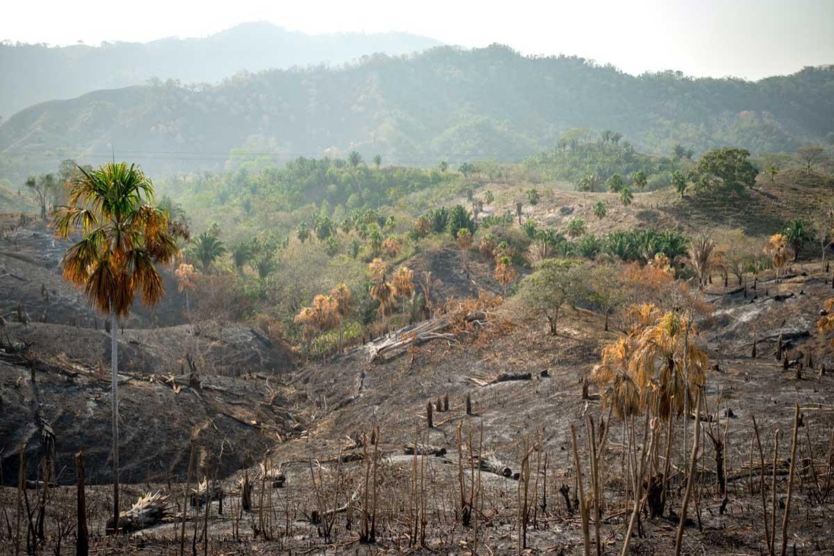 deforestación de los bosques , Colombia
