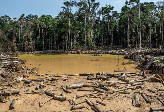 región amazónica, deforestación