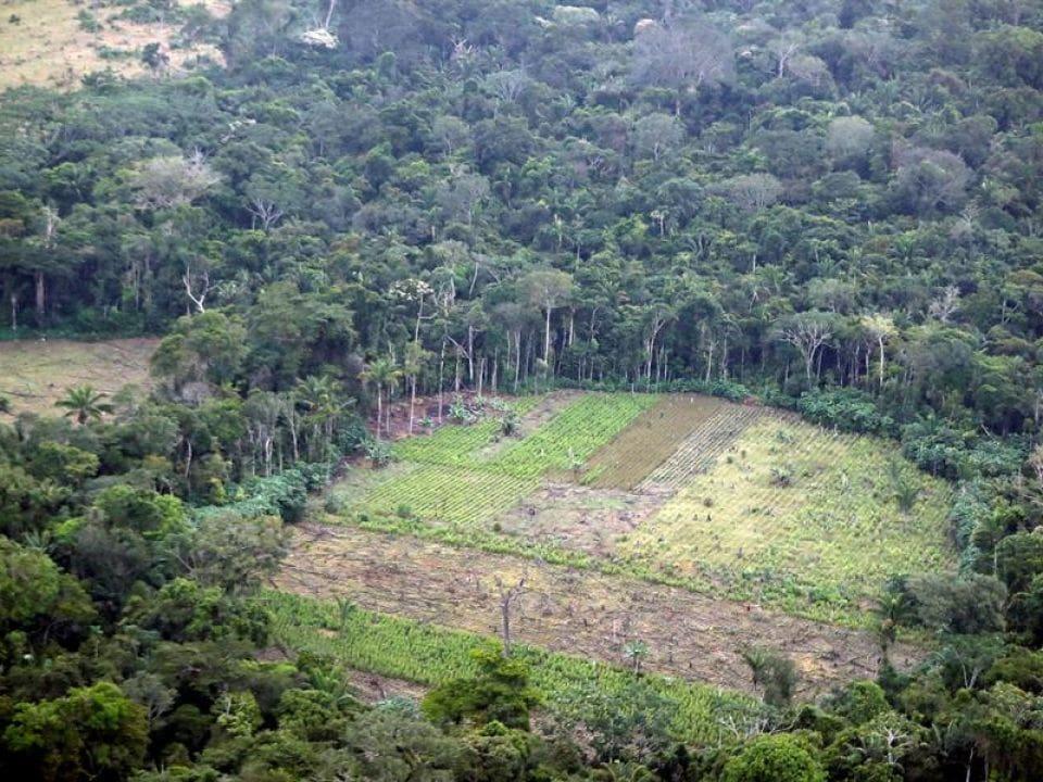 La praderización de los bosques en el sur del país, Colombia