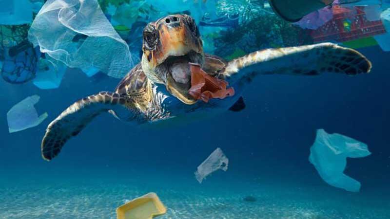 presencia de los microplásticos en los océanos