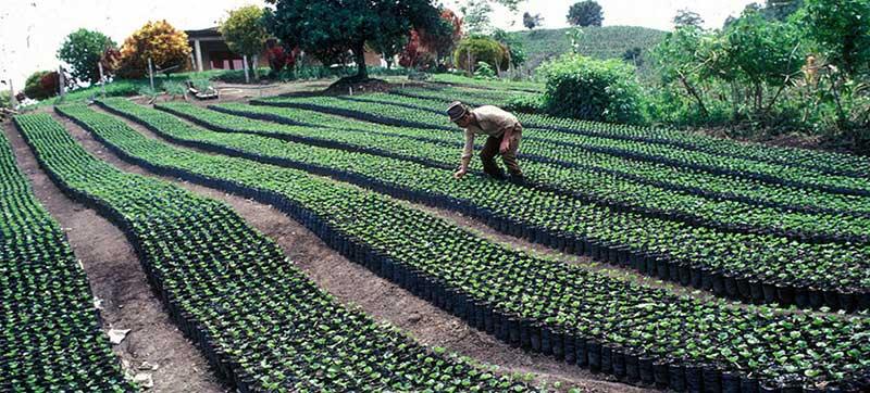 producción de alimentos en los países de más bajos ingresos