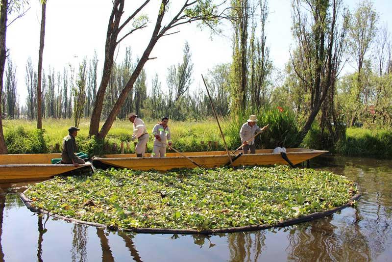 sistemas alimentarios de las comunidades indígenas
