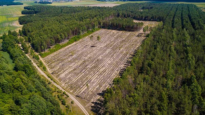 Ley de Delitos Ambientales, deforestación