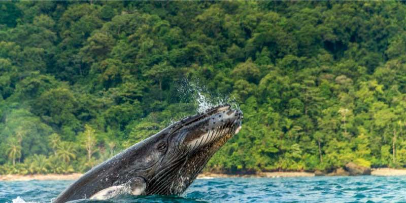 Pacífico, avistamiento de ballenas