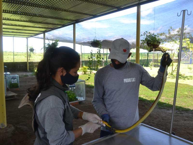 Centro de Atención de Fauna Silvestre de Mineros Aluvial SAS en El Bagre