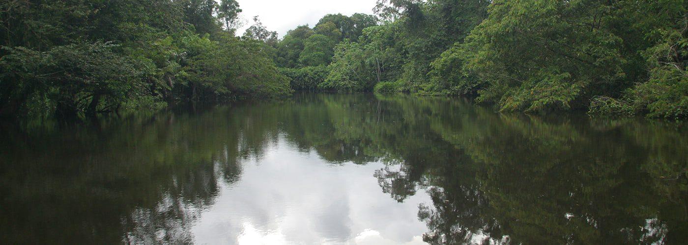 protección de los manglares